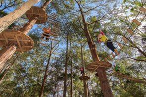 Tree-Tops-Adventure